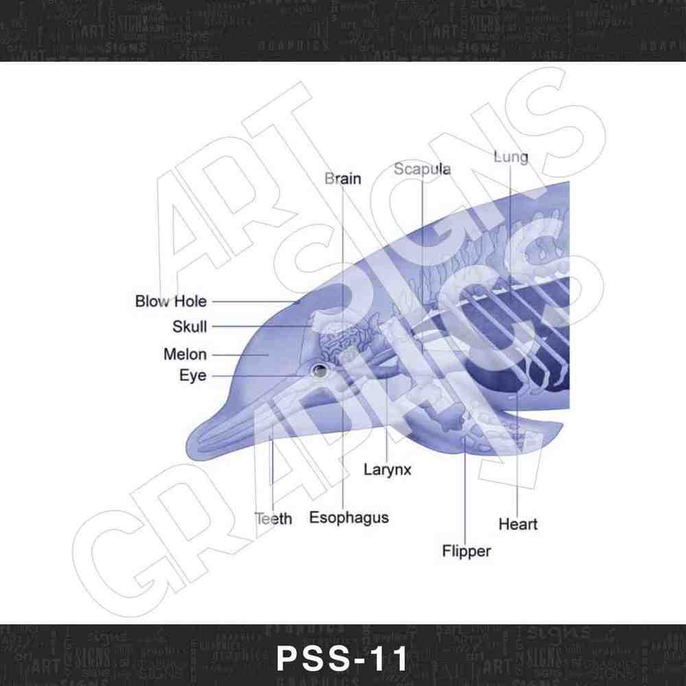 PSS_11.jpg