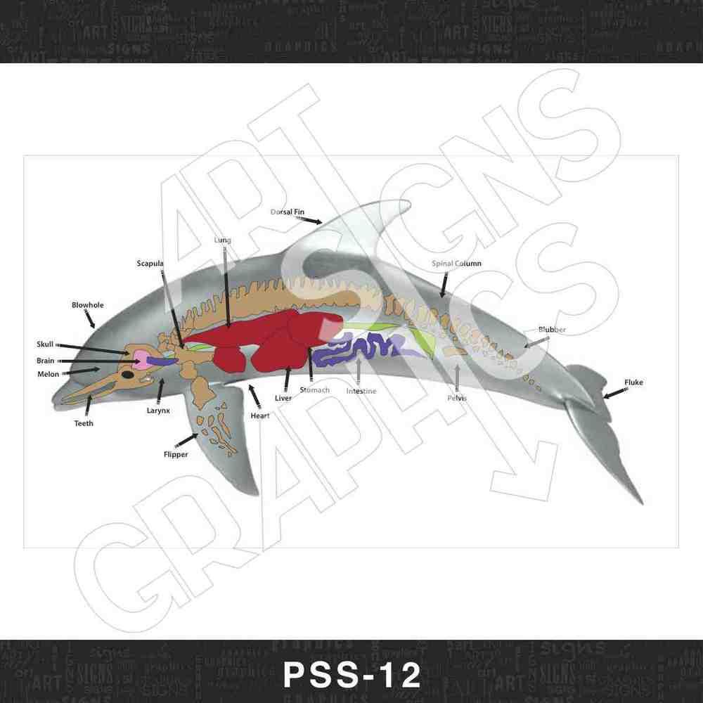 PSS_12.jpg