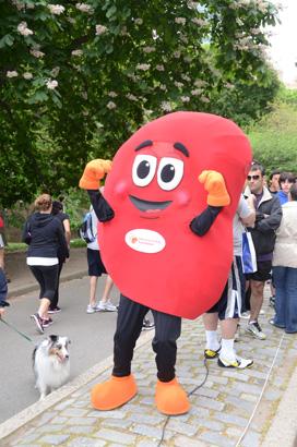 Practice, practice, practice: The Healthy Kidney 10k