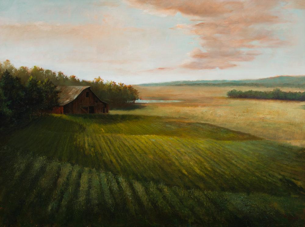 Evening Rolling Fields