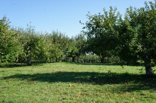 fishkillfarmsorchard