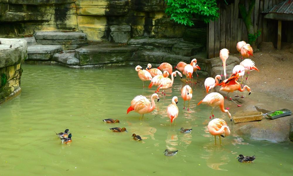 Flamingo Exhibit at John Ball Zoo, Grand Rapids, MI.