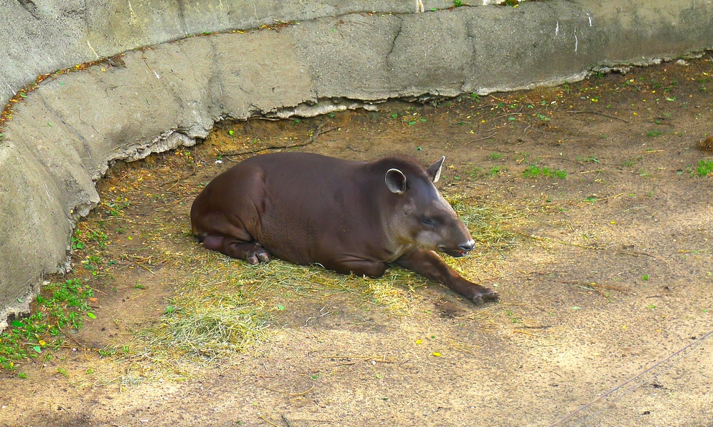 John Ball Park Zoo.JPG