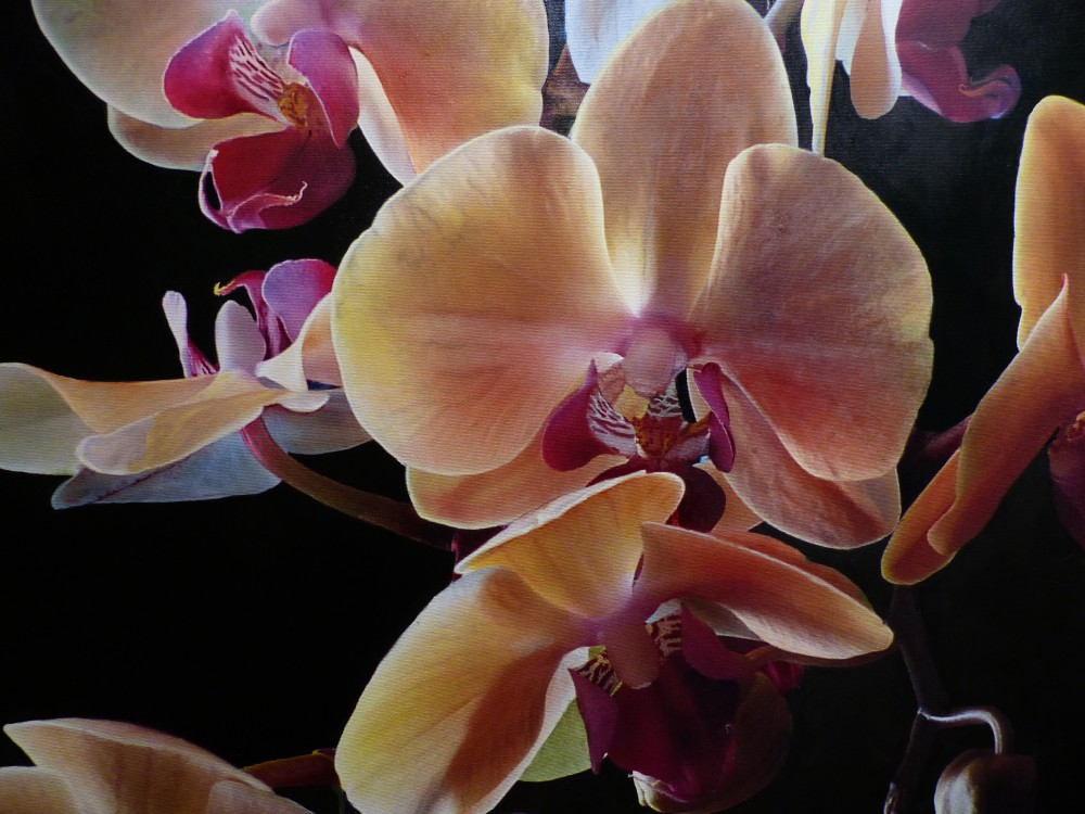 Orchids in 3D