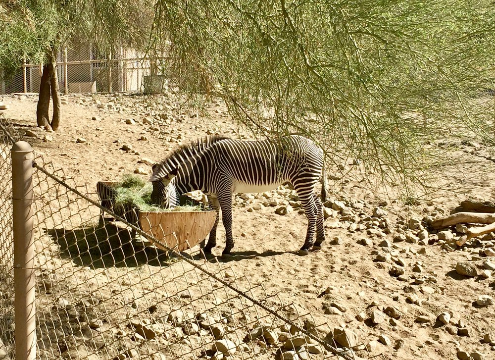 Living Desert Zebra.jpg