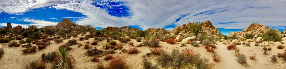 Joshua Tree Family Vacation 3.jpg