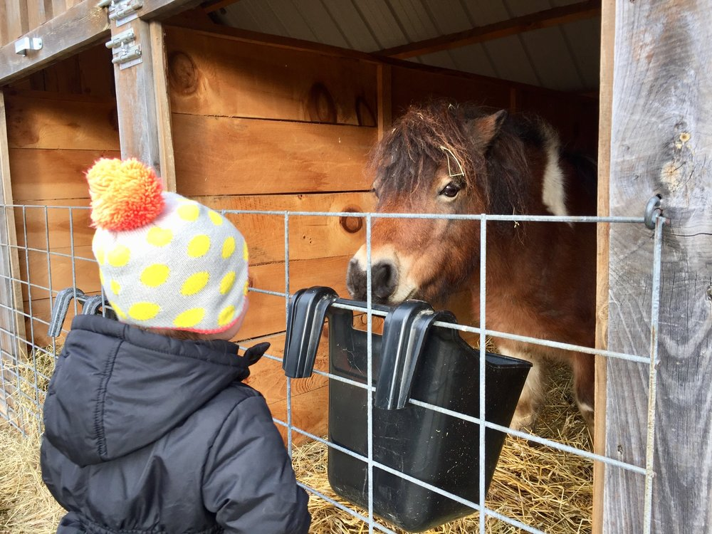 Hart Tree Farm horses.jpg