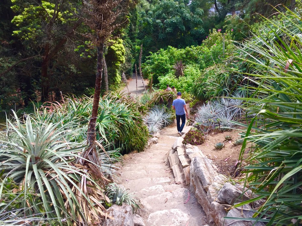 Botanicale Garden San Francisco .jpg