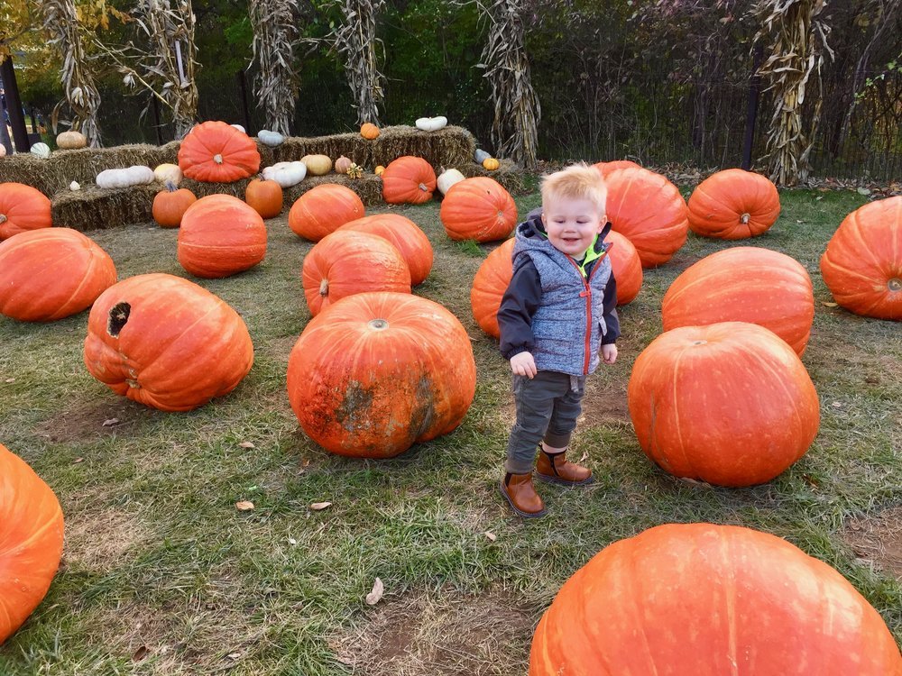 Fredrick Meijer Gardens pumpkins.jpg