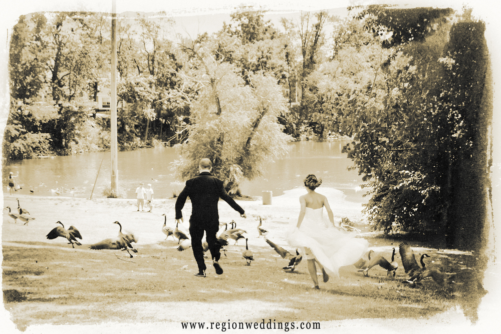 The bride and groom chase geese at the Hobart Lakefront in this fun wedding photo.