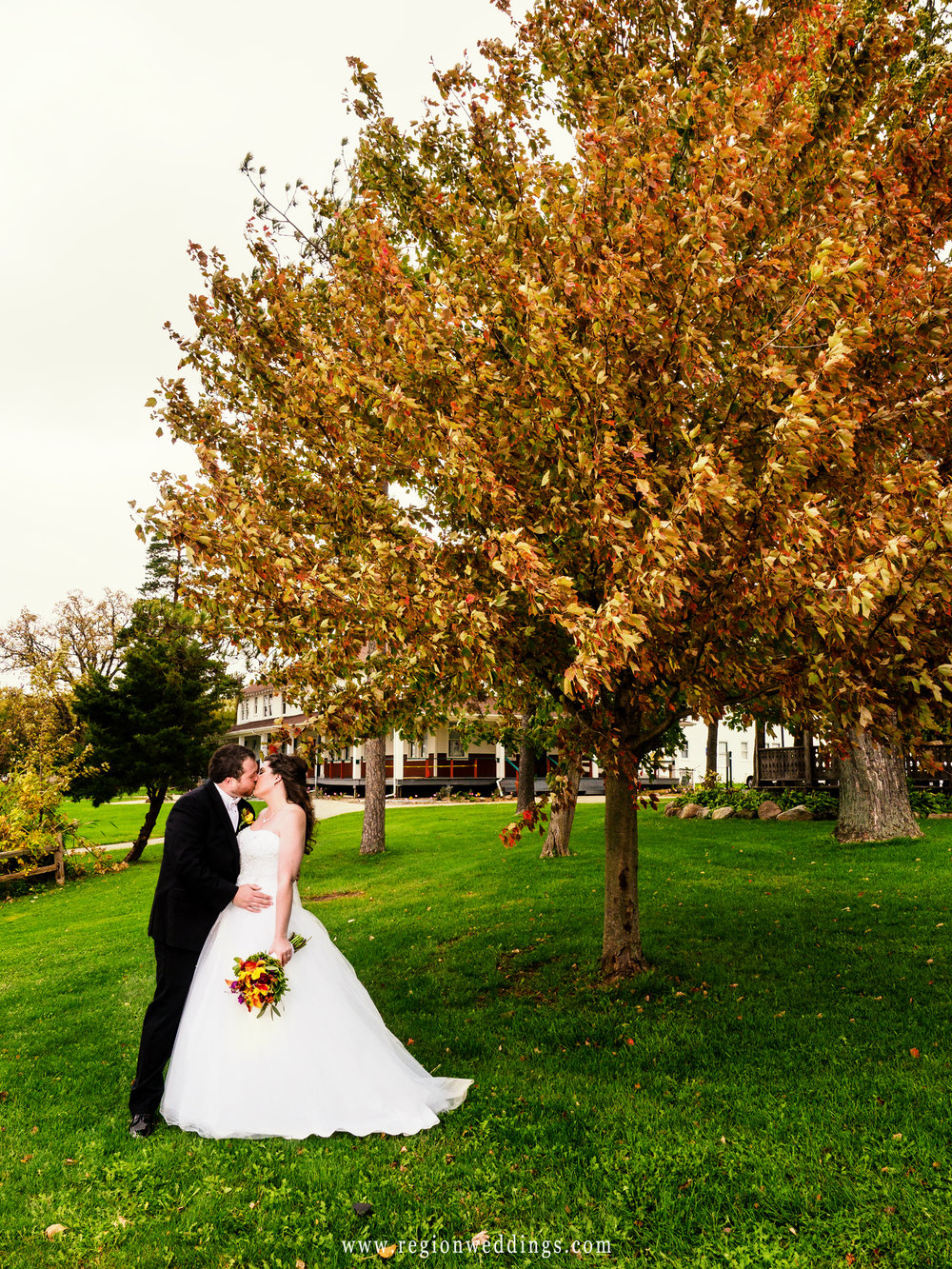 A large tree with yellow Fall leaves looms over the bride and groom.