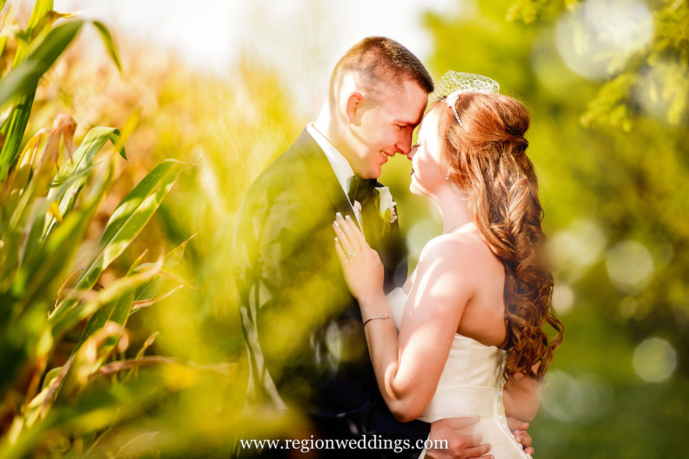 Summer wedding photo taken in a southern Indiana cornfield.