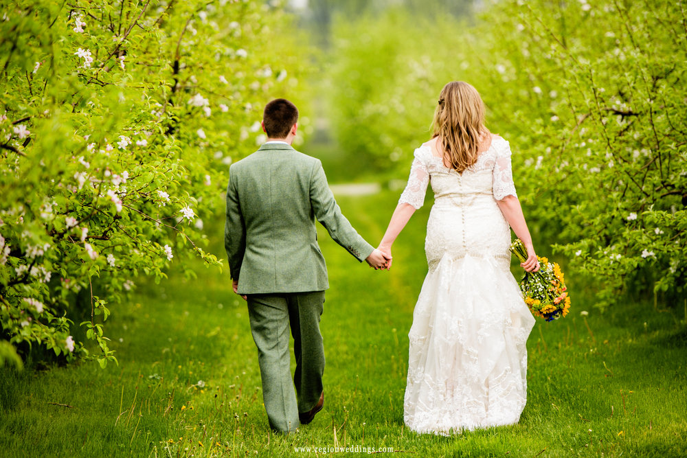 Bride and groom walk along the apple orchards.