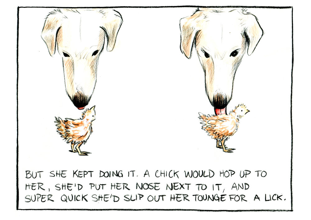 """Chicken Mama"" Panel 11. Watercolor and pencil on Paper."