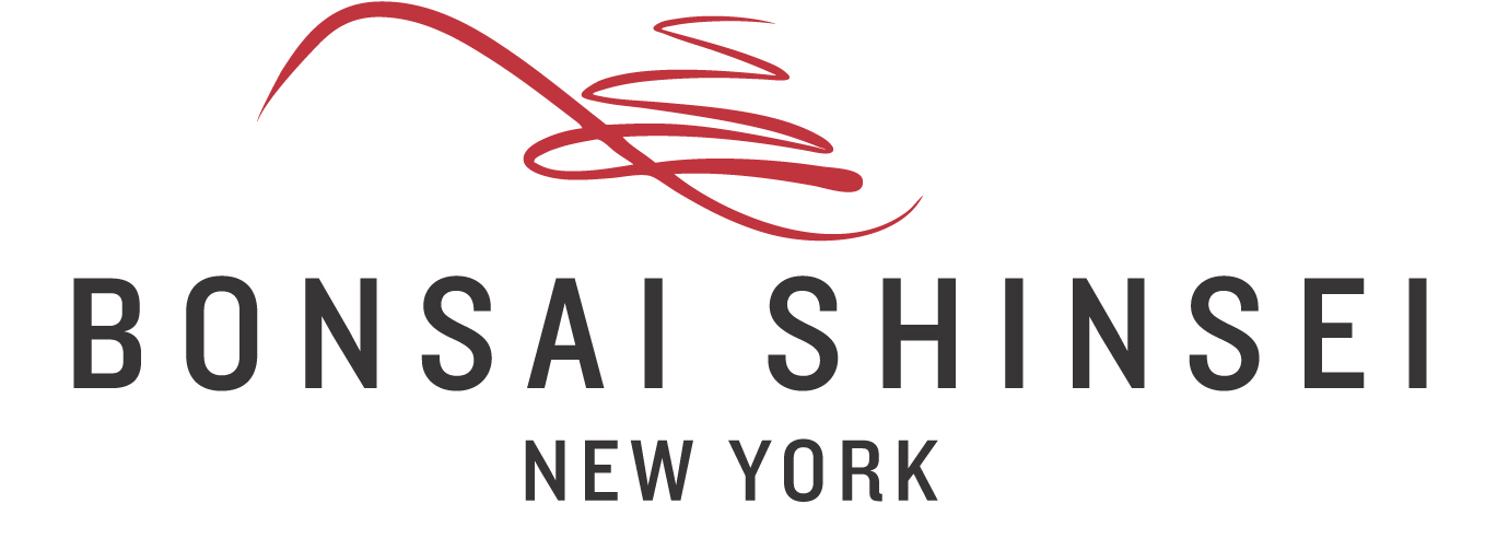 Bonsai Shinsei New York