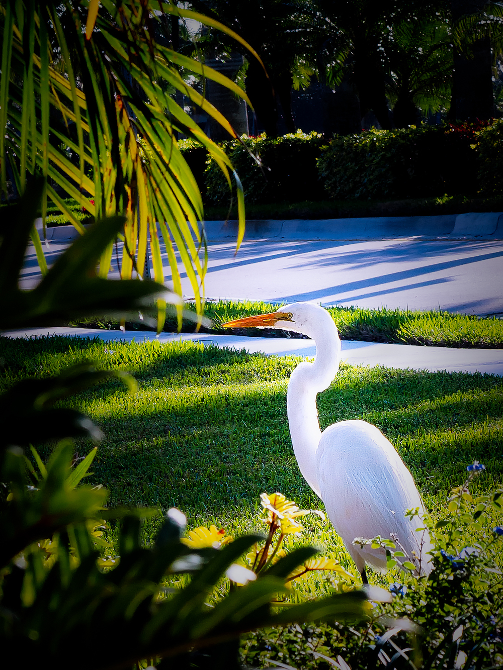 """Tall White Heron"""