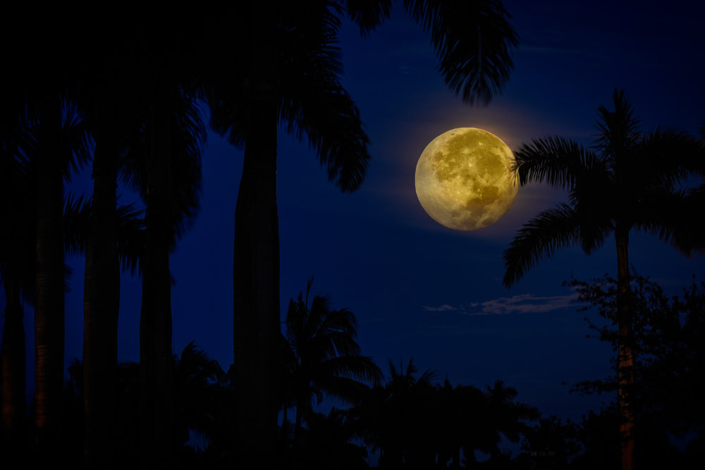 """""""End of Summer Moon"""""""