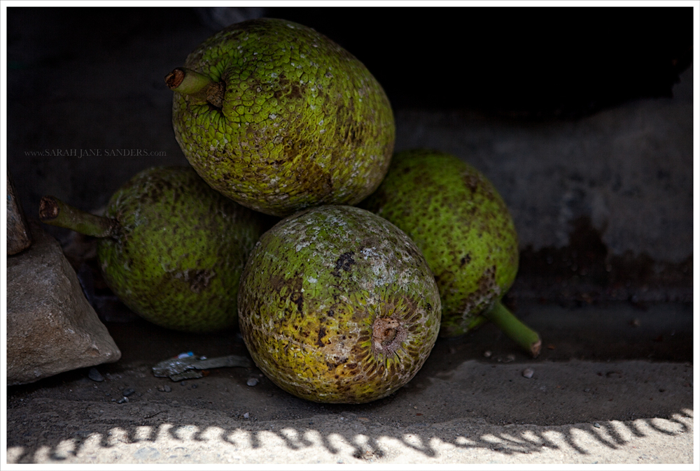 Haitian Bread Fruit_Sarah Jane Sanders c2014