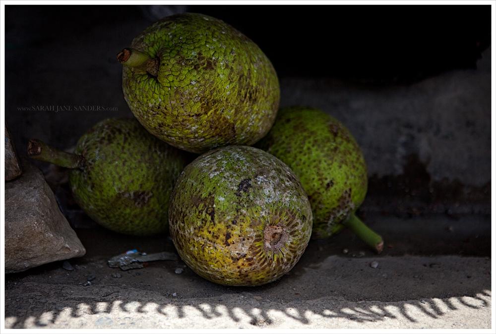 Haitian Bread Fruit_Sarah Jane Sanders c2014