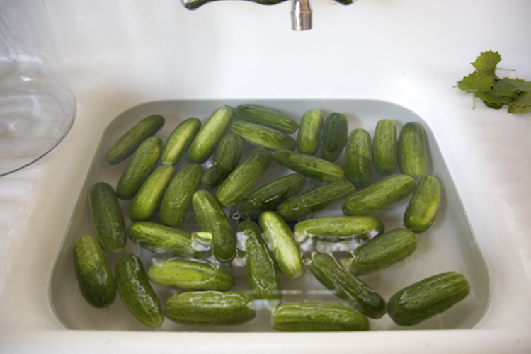 getting ready for pickles