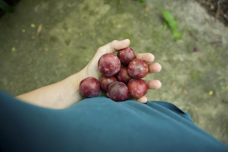 small harvest