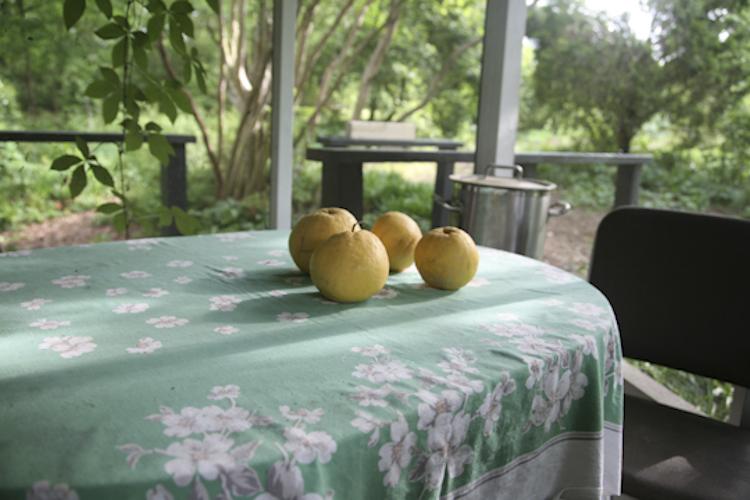 grapefruits on porch