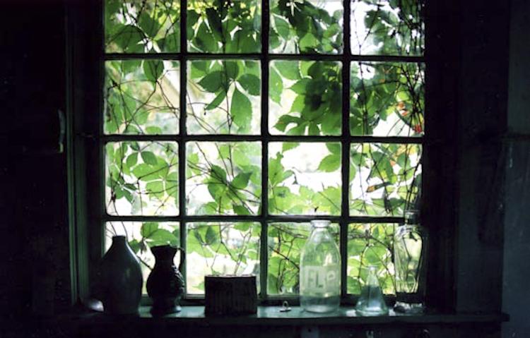 rebecc'as kitchen window