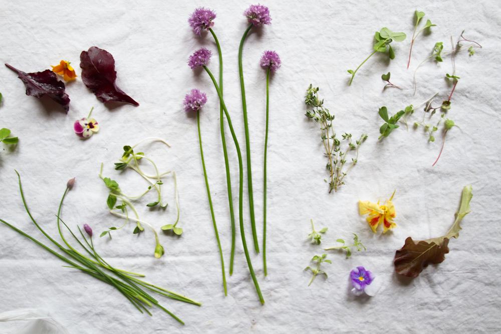 fresh herbs-4.jpg