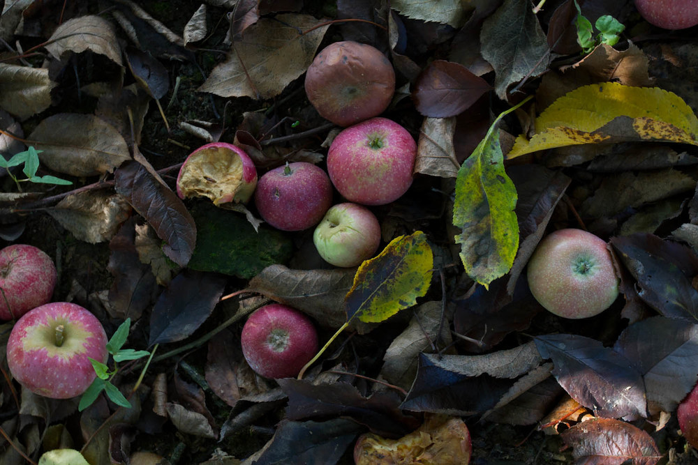 early fall_apples-5254.jpg