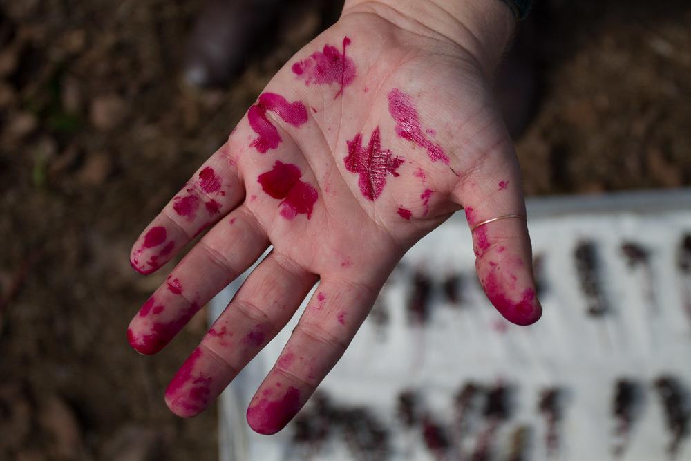 early fall_pokeberries_ink-5460.jpg