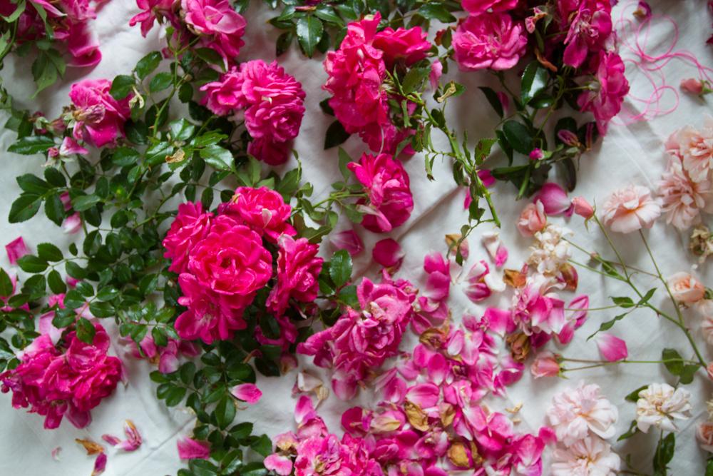 garden roses-6529.jpg