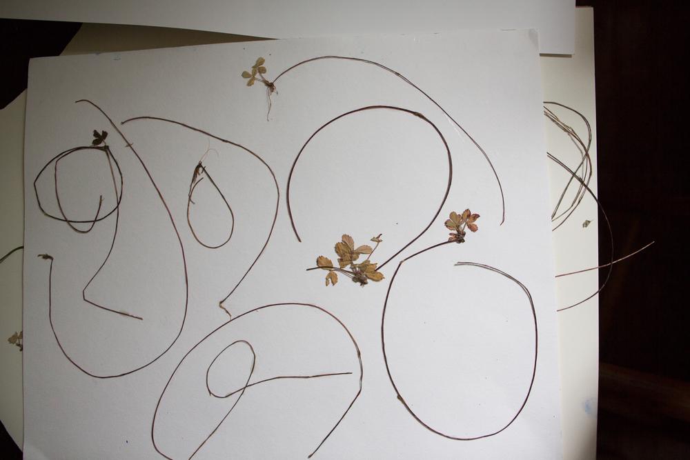 susan hable_garden inspiration-5462.jpg