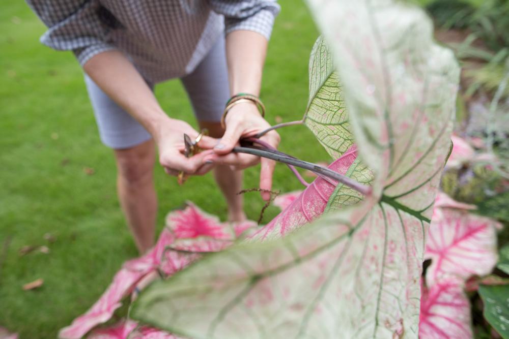susan hable_garden inspiration-5692.jpg