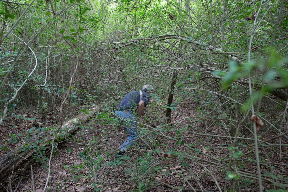 bob in woods-4296.jpg