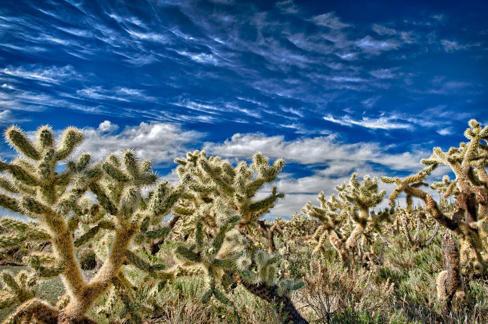 Cirrus and Cactus