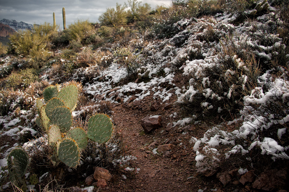 PRICKLY SNOW A prickly pear cactus is surrounded with fresh snow fall