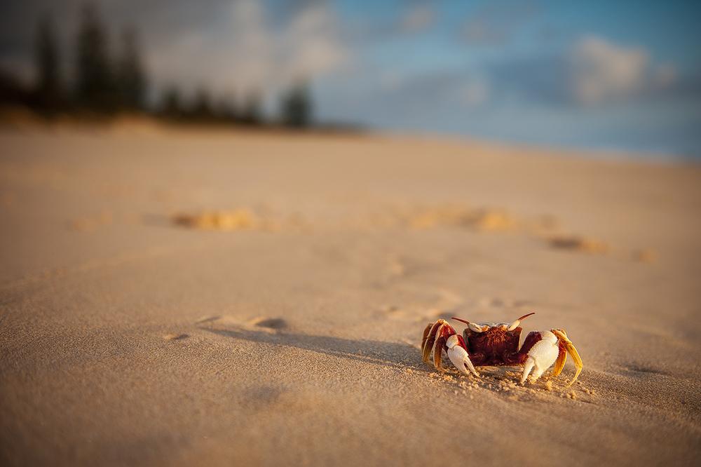 A Little Crabby.jpg