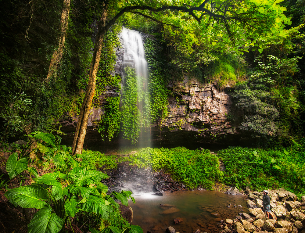 Crystal Shower Falls in Dorrigo National Park, NSW