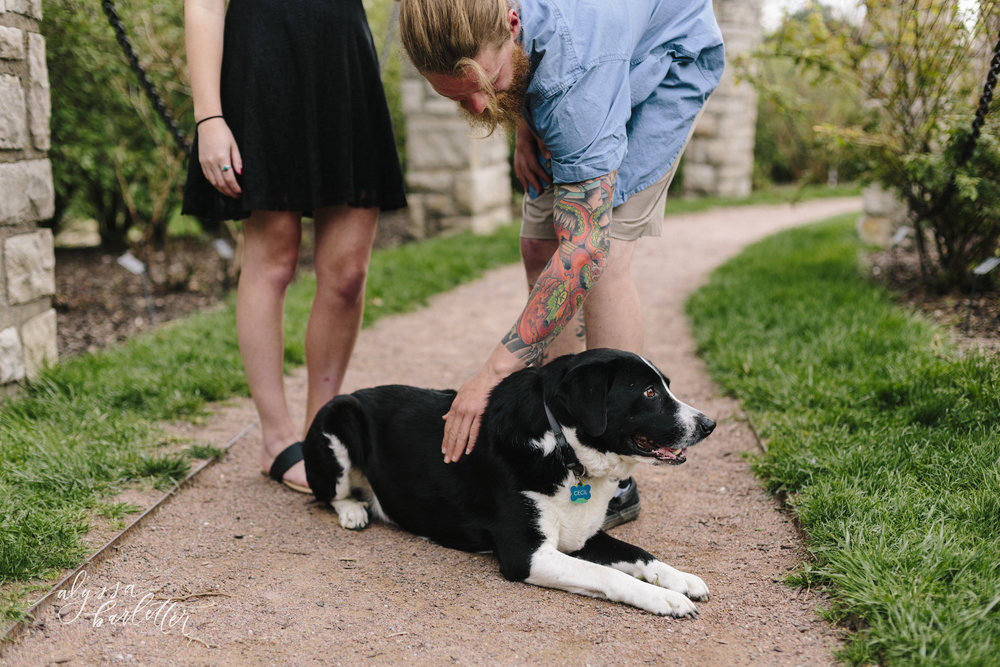 alyssa barletter photography loose park dog lifestyle session-1-5.jpg