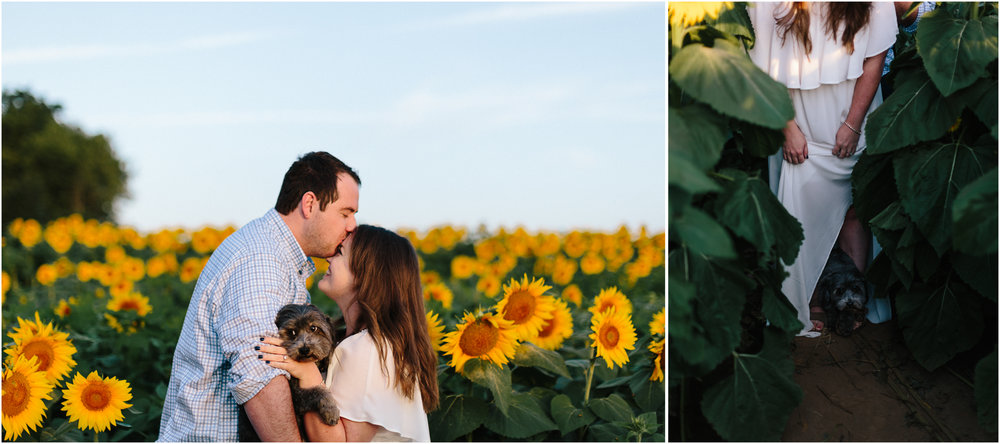 alyssa barletter photography sunflower field photos-7.jpg