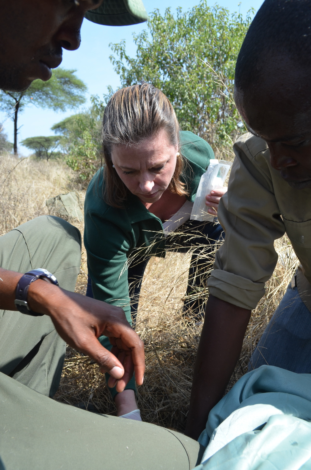 """HALI Project lead, Professor Jonna Mazet from UC Davis, collects a nasal swab sample from the giraffe while park rangers monitor the respiration rate.                 Normal.dotm    0    0    1    21    123    University of California, Davis    1    1    151    12.0                        0    false          18 pt    18 pt    0    0       false    false    false                                           /* Style Definitions */ table.MsoNormalTable {mso-style-name:""""Table Normal""""; mso-tstyle-rowband-size:0; mso-tstyle-colband-size:0; mso-style-noshow:yes; mso-style-parent:""""""""; mso-padding-alt:0in 5.4pt 0in 5.4pt; mso-para-margin:0in; mso-para-margin-bottom:.0001pt; mso-pagination:widow-orphan; font-size:12.0pt; font-family:""""Times New Roman""""; mso-ascii-font-family:Cambria; mso-ascii-theme-font:minor-latin; mso-fareast-font-family:""""Times New Roman""""; mso-fareast-theme-font:minor-fareast; mso-hansi-font-family:Cambria; mso-hansi-theme-font:minor-latin;}"""