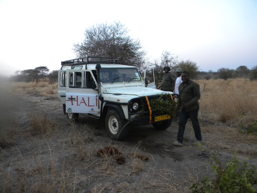 Innovation in the bush: The HALI field vehicle overheated due to a clogged grill from grass particles. HALI's amazing bush driver and mechanic Erasto repaired the vehicle on site and placed branches in front of the grill to reduce the influx of grass.