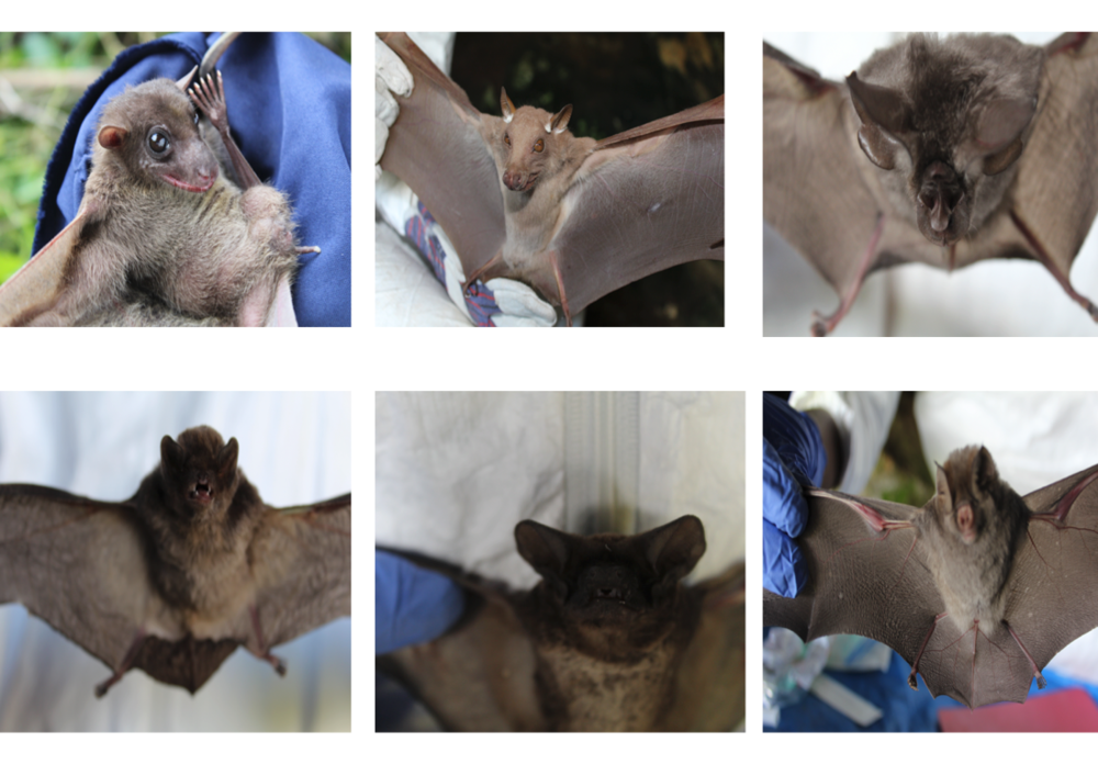 Some of the different bat species we came across