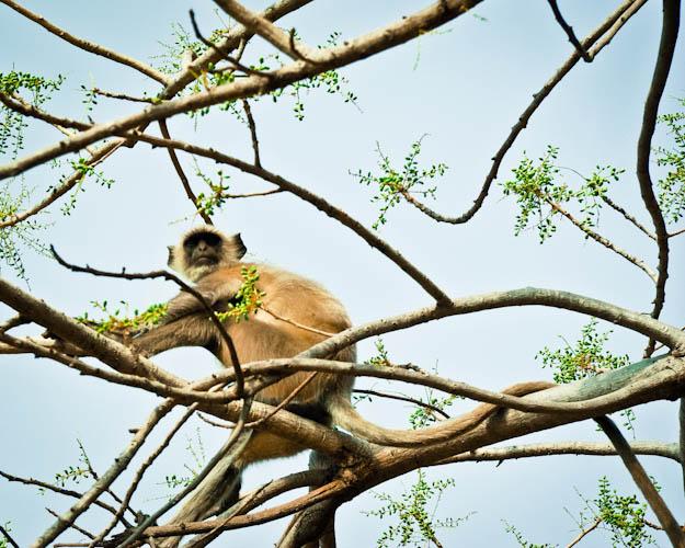 monkey-5.jpg