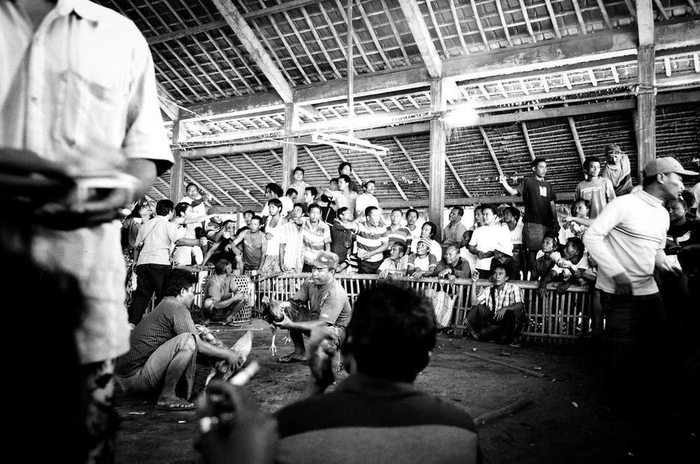 Amed, Bali, Indonesia. 2012.  As a man collects money for bets, the handlers begin to agitate the birds and ruffle their feathers which make the birds anxious to fight.