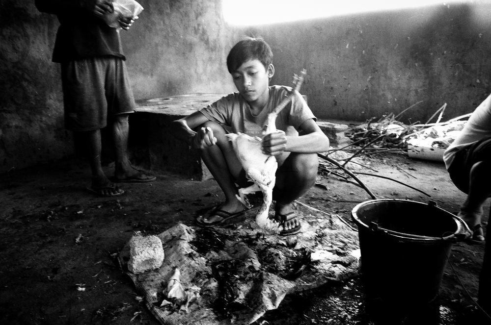 Amed, Bali, Indonesia. 2012.  After every fight the wounded birds are killed, plucked and then distributed for meat.