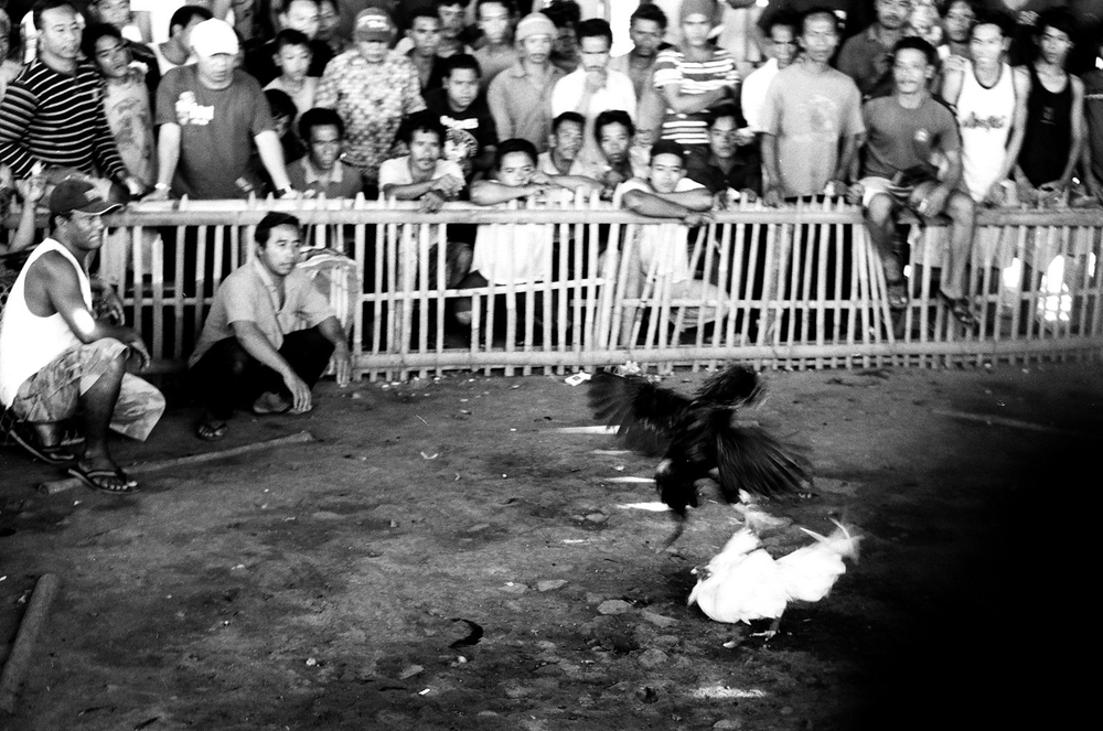 Amed, Bali, Indonesia. 2012.  One bird delivers a severe strike on it's opponent as the men watch.
