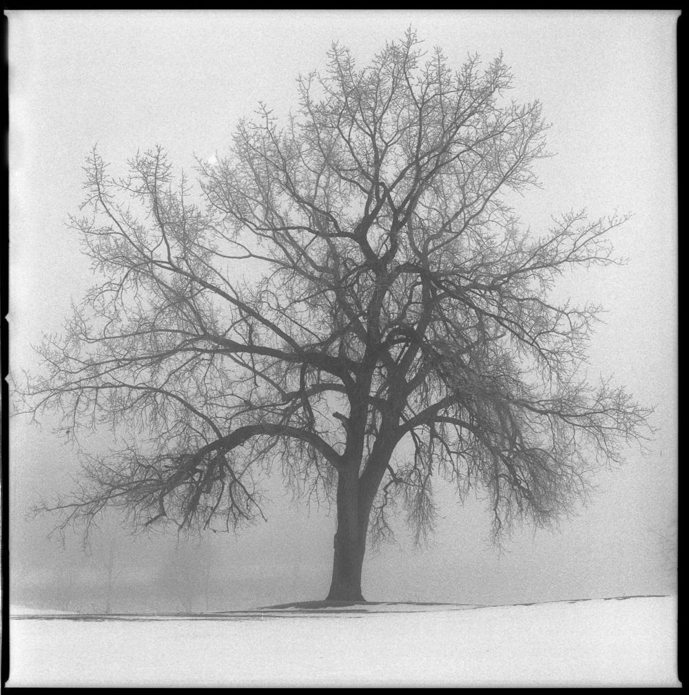 Torchardtree.jpg