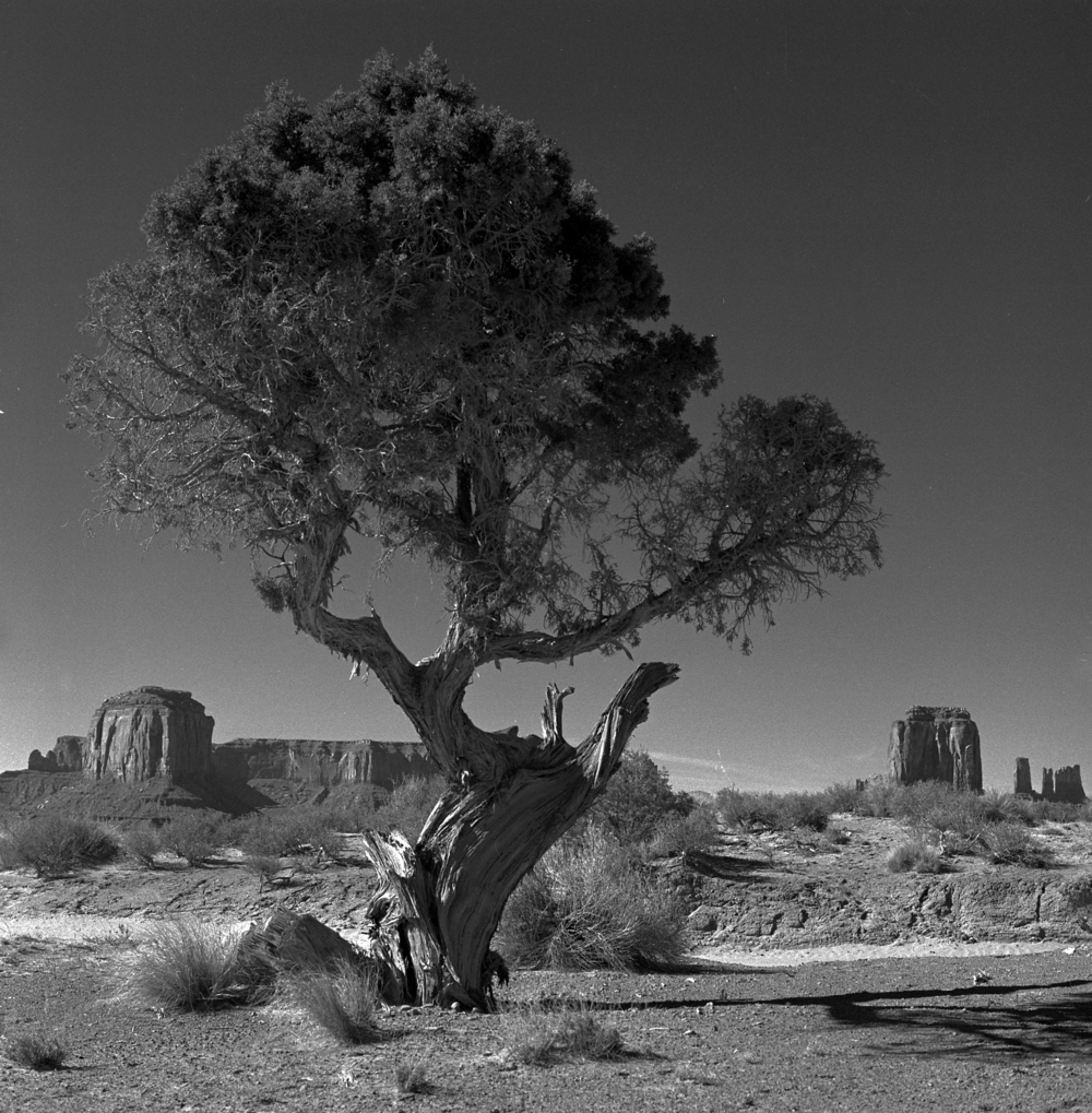 Ttree.jpg