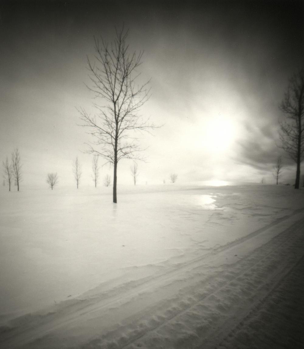 sun&tree300.jpg